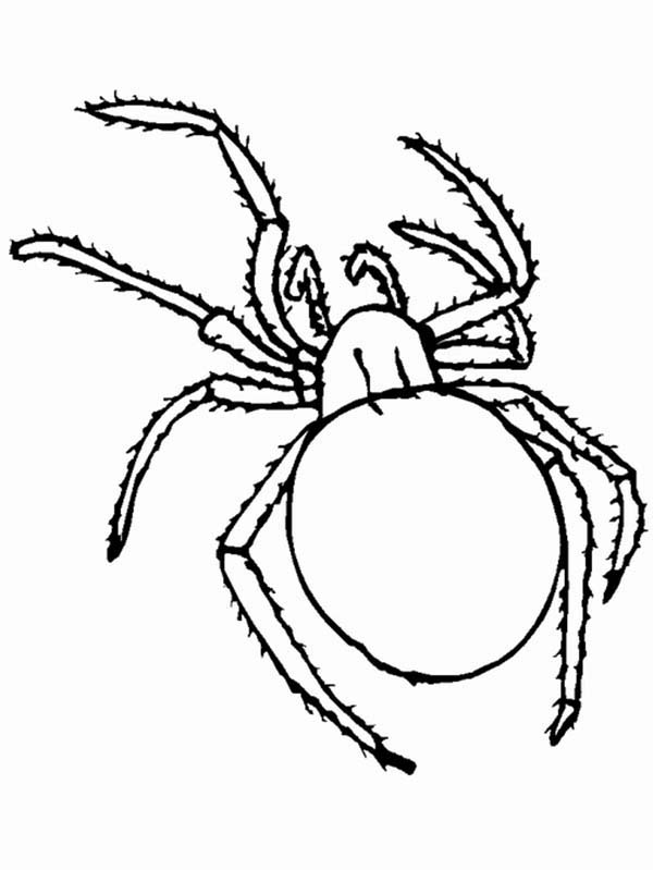 Insect Bugs Spider Coloring Page Coloring Sun Spider Coloring Page Spider Pictures Bug Coloring Pages