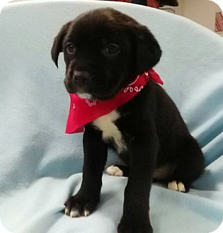 Pin by Jessica Higgins on love it! | Puppies, Rottweiler mix