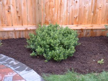 Best Shrubs And Bushes For Southeastern Pa Top Performers