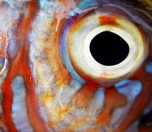 Fish eye - Deborah Lattimore