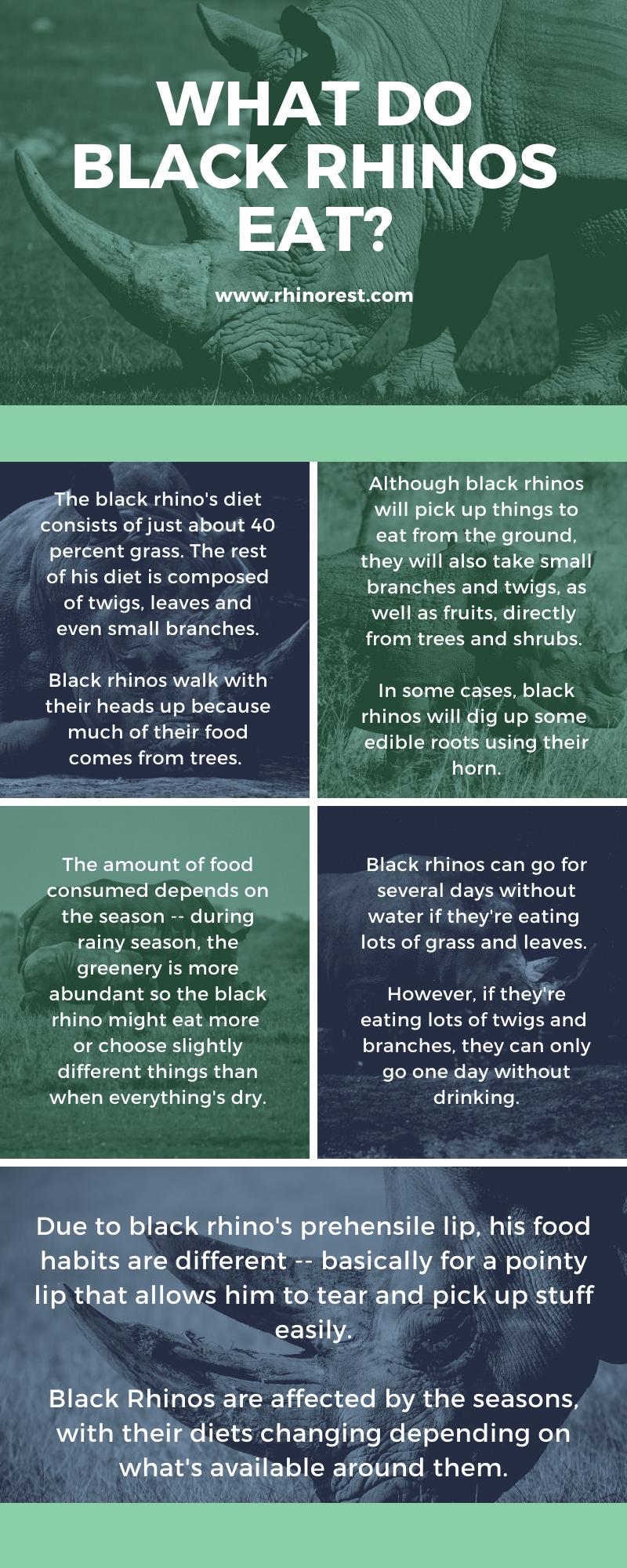 What Do Rhinos Eat - Rhino Diet - Do Rhinos Eat Meat ...