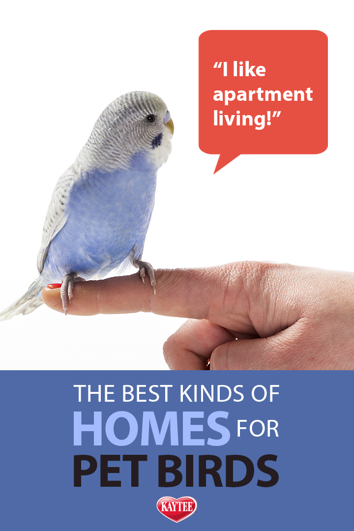 Parakeets And Other Small Birds Thrive In Apartments Petfacts