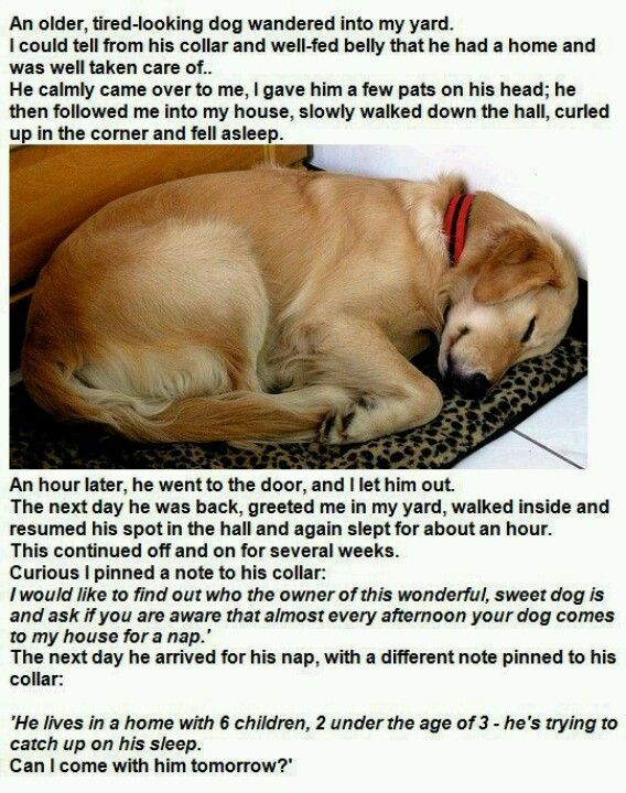 Dog Tired Funny Animals I Love Dogs