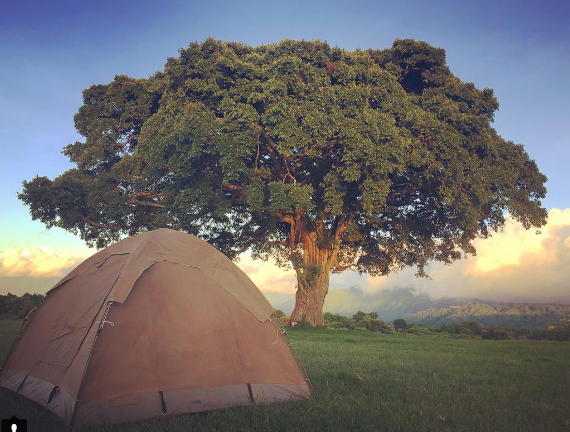 Simba camp grounds on the ledge of Ngorongoro Crater. Zebras and buffalo are often found grazing in the grass as you pitch your tent.