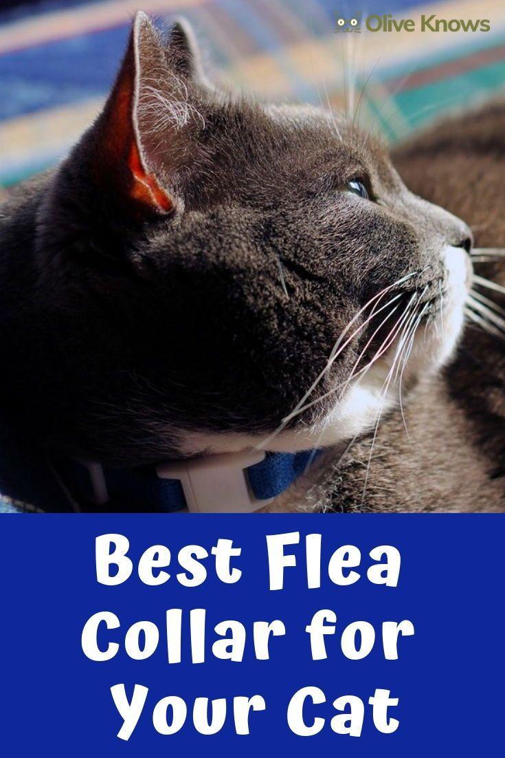 Best Flea Collar For Your Cat Oliveknows Cats Cat Care Sick Cat