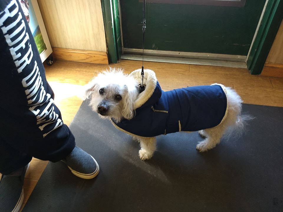 Mom Brought Casper In All Dressed For The Snow Good Boy Casper Learn More About Pet Health And Safety In The Winter Months H In 2020 Pet Safety Pets Animal Hospital