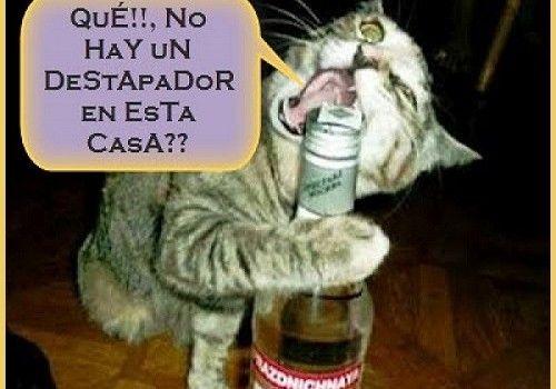 Imagenes De Gatos Con Frases Chistosas Para Descargar Humor Memes Animals