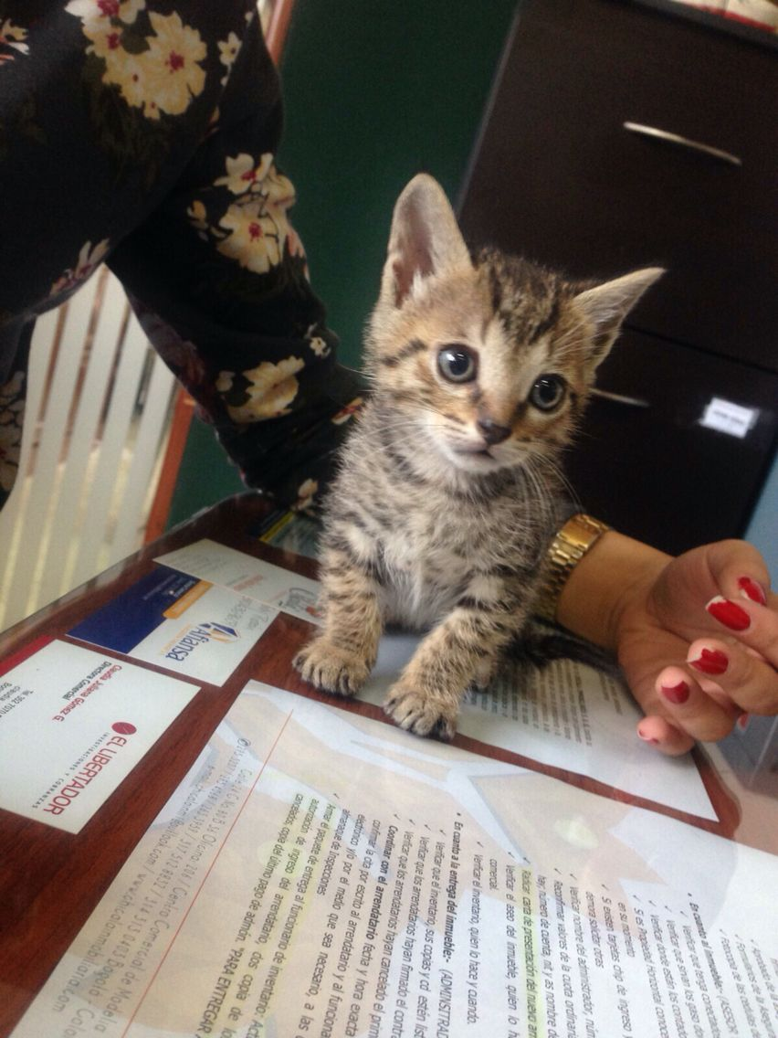 Mi gatito.. Dalí | Kitty ... !! | Pinterest | Dalí y Gato