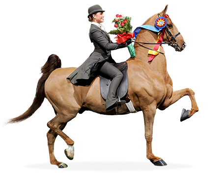 n Saddle Seat Equitation classes, riders should convey the impression of effective and easy control. To show a horse well, he should show himself to the best advantage. Ring generalship must be taken into consideration by the judges. A complete picture of the whole is of major importance...