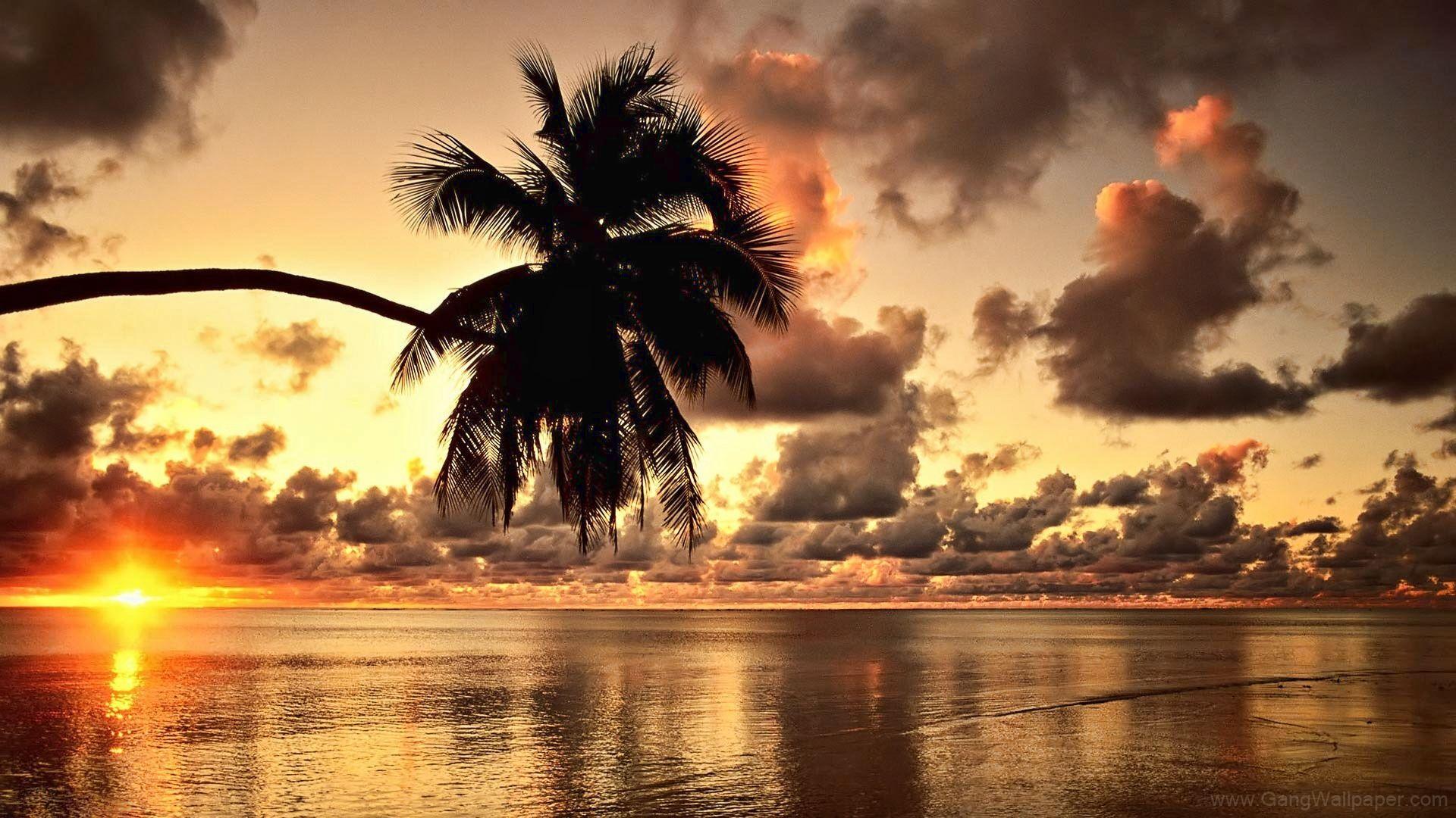 Hawaii Beach Sunset Background Hd Wallpaper Beautiful Scenery Wallpaper Beach Sunset Wallpaper Sunset Wallpaper