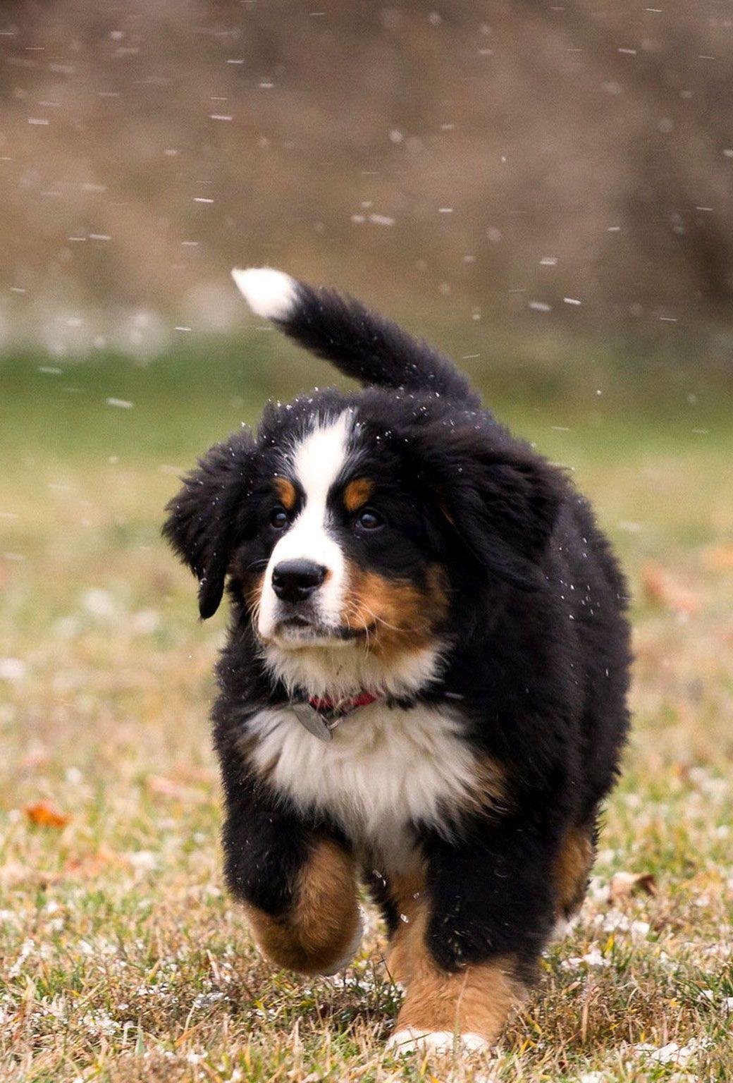 Pinterest Catherinesullivan2017 Best Puppies Puppies Dogs And Puppies