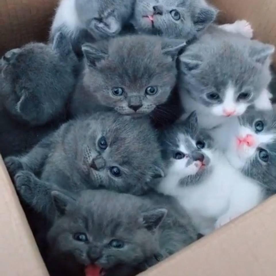 Awesome Little Kittens Cats Picture Kittenscuddling Kitten