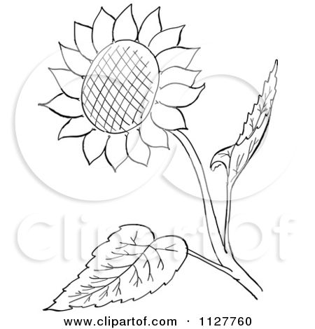 Cartoon Of A Retro Vintage Black And White Sunflower And Leaves Line