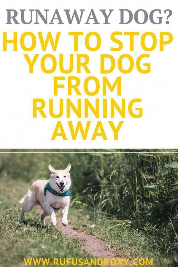 Your Dog Is Chewing Things He Shouldn T Need Our Secret To Using