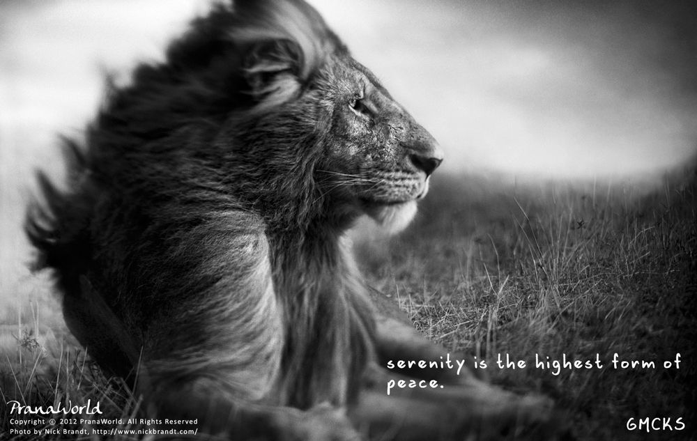 'Serenity is the highest form of Peace.'