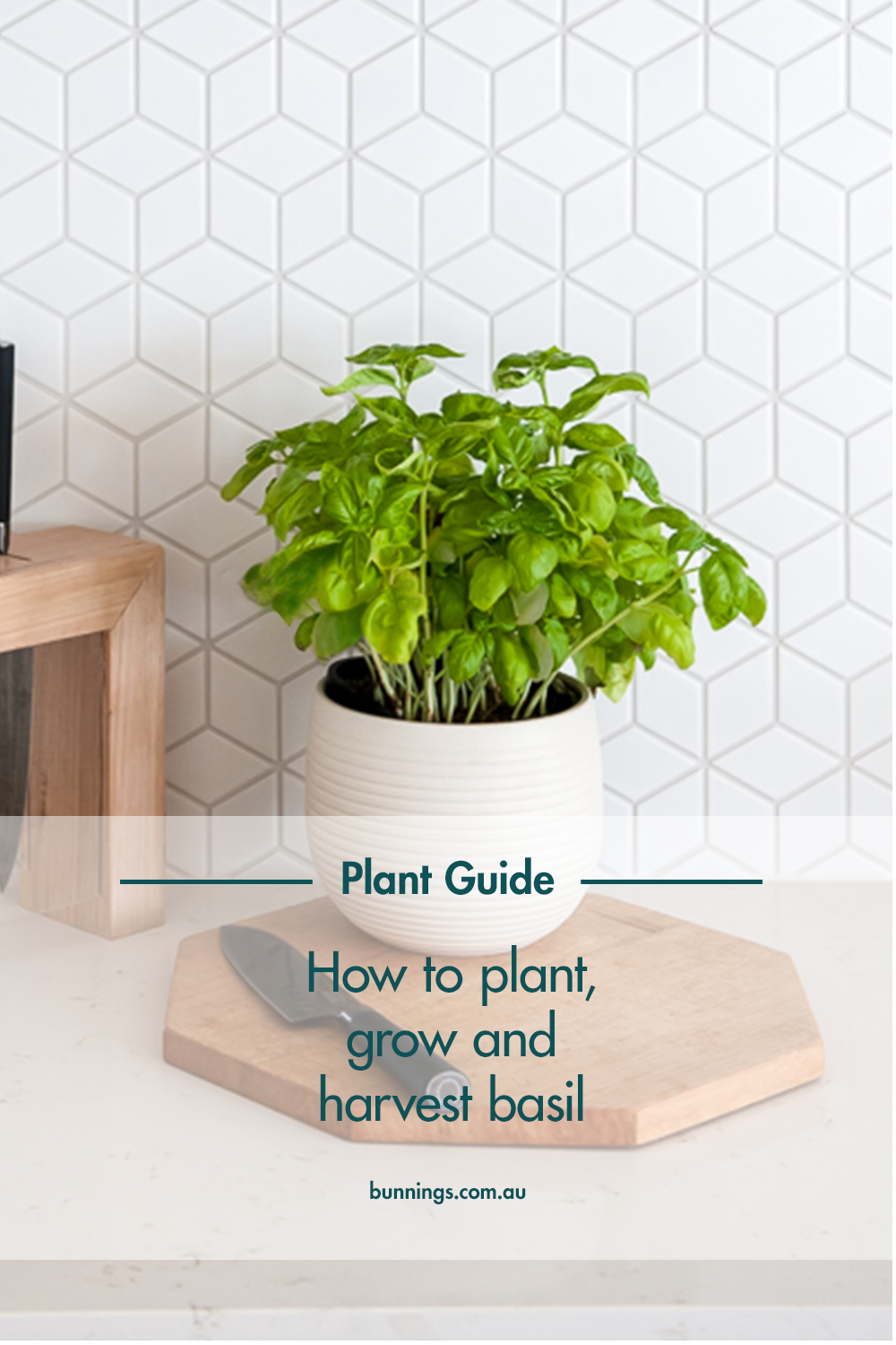 Ever thought about caring for your own basil plant? Well