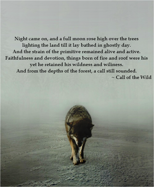 Things Born Of Fire And Roof Were His Yet He Retained His Wildness And His Wiliness And From The Depths Of The Fore Wolf Quotes Wild Quotes Jack London Quotes