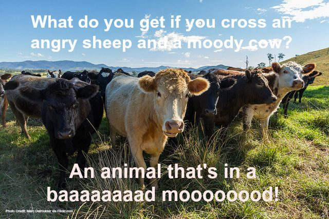 23 Funny Farm Animal Jokes That Will Make You Laugh Out Loud Animal Jokes Farmer Jokes Farm Jokes