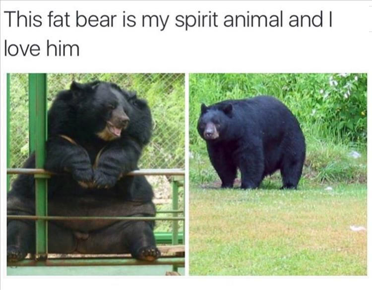 Funny Friday Morning Meme : Funny animal pics for your friday real life animal and funny