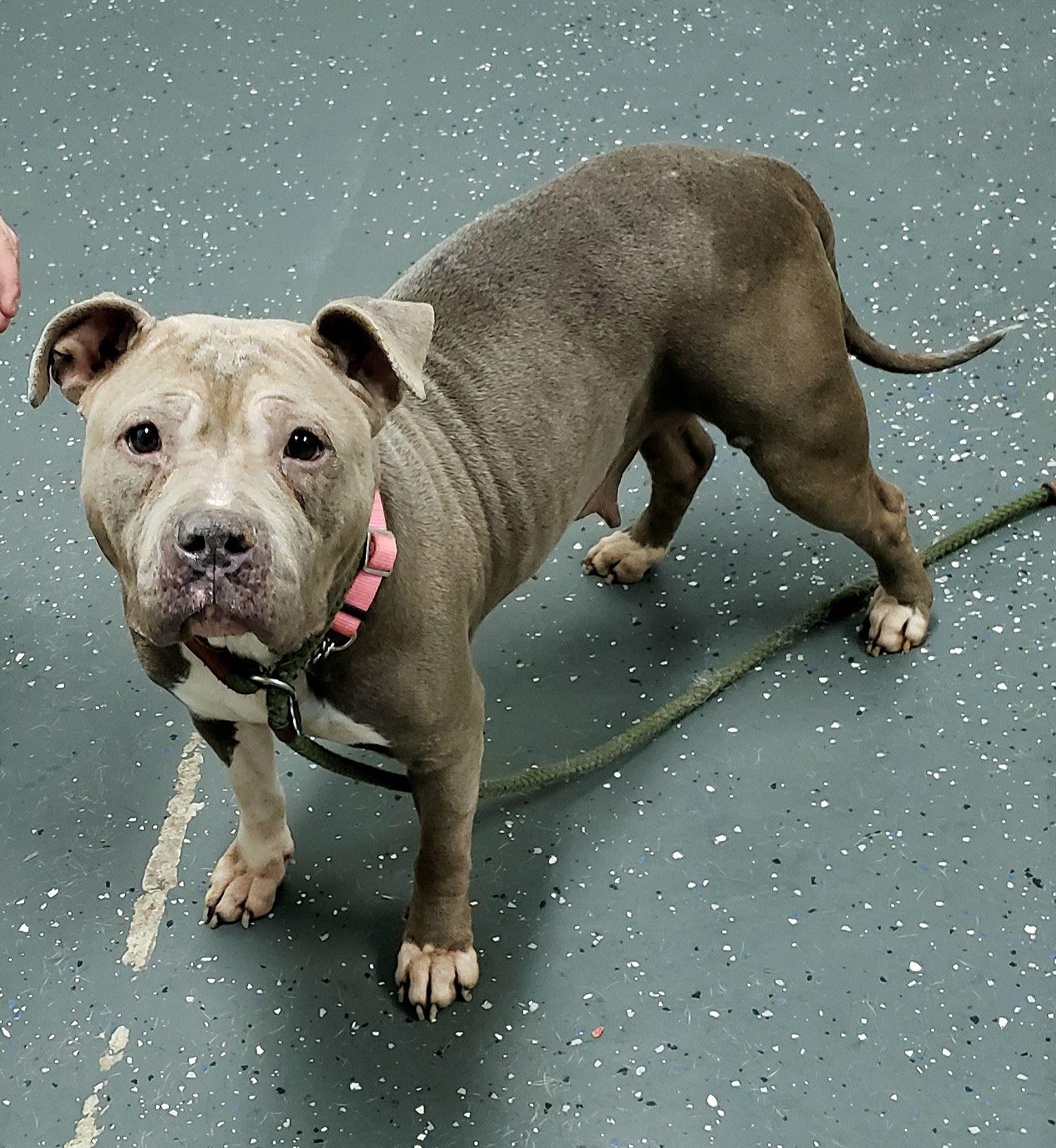 Adopt Pippa 37175 On Petfinder Dog Adoption Help Homeless Pets Homeless Pets