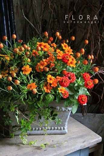 「Summer Orange Yellow Green Rooms」おしゃれまとめの人気アイデア|Pinterest |Amenities LLC