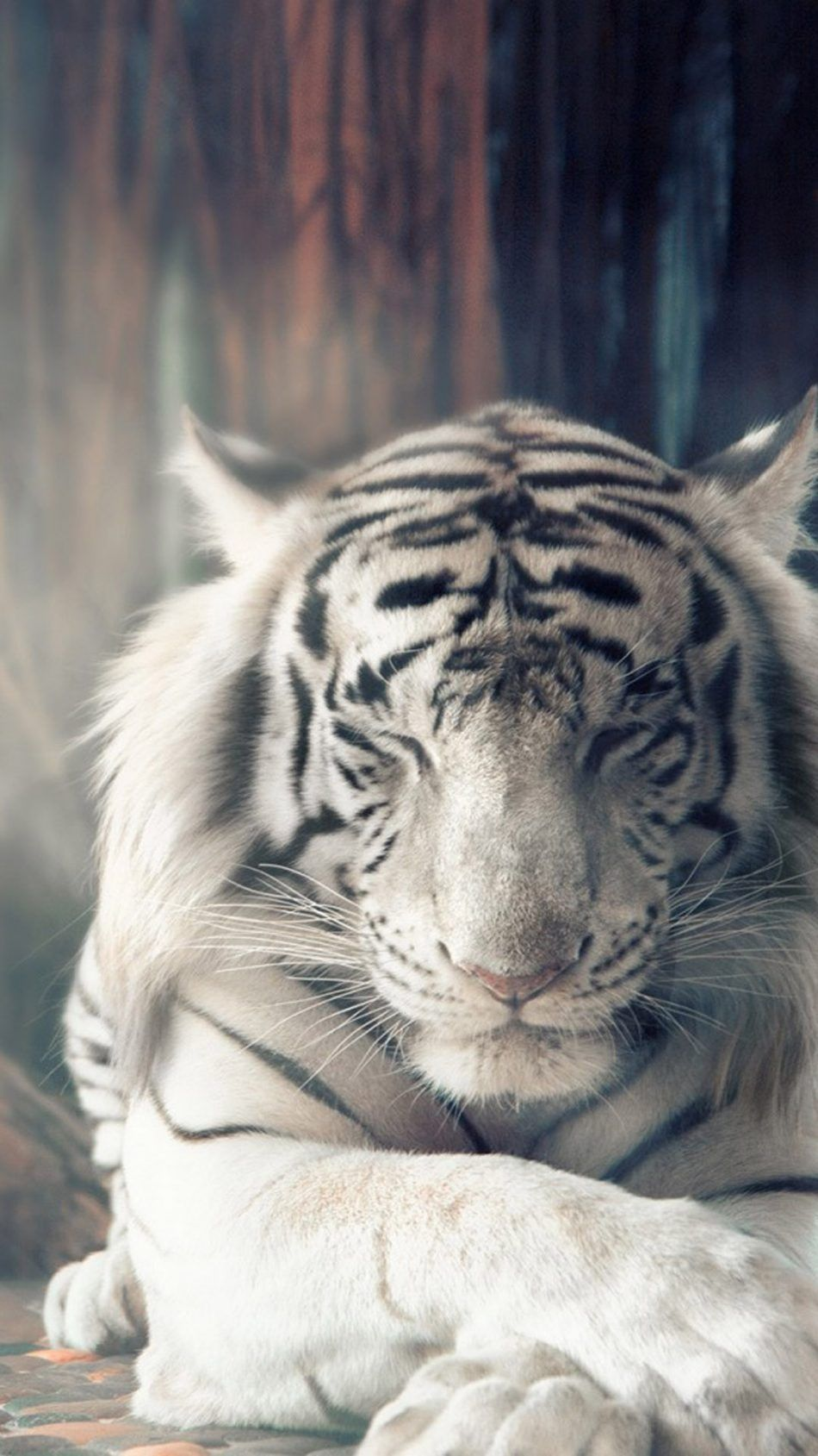 White Bengal Tiger Wallpapers For Mobile Tiger Spirit Animal Tiger Wallpaper Animals Beautiful