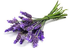 12 Herbs Or Plants Best At Deflecting Negative Energy Lavender Essential Oil Lavender Essential Therapeutic Essential Oils