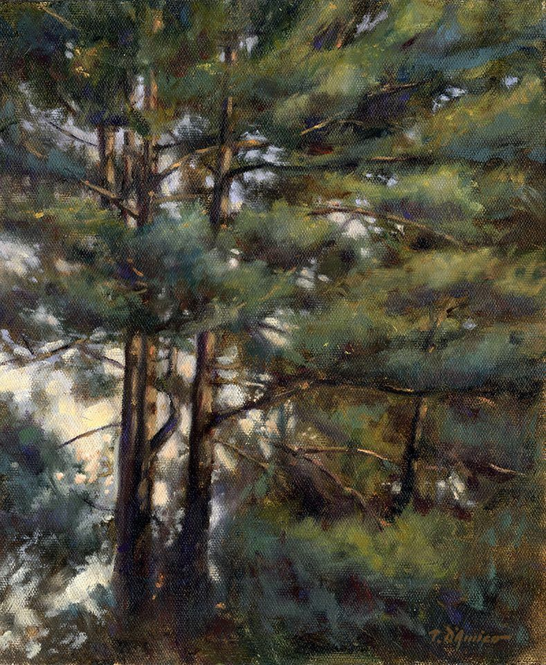 Tony D'Amico‎, The Pines Outside My Window