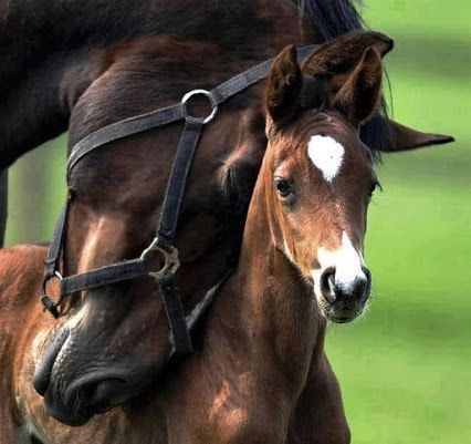 American quarter horse and colt. My dad raised them when I was a kid growing up in Gleed, WA. Loved seeing the horses in the field.