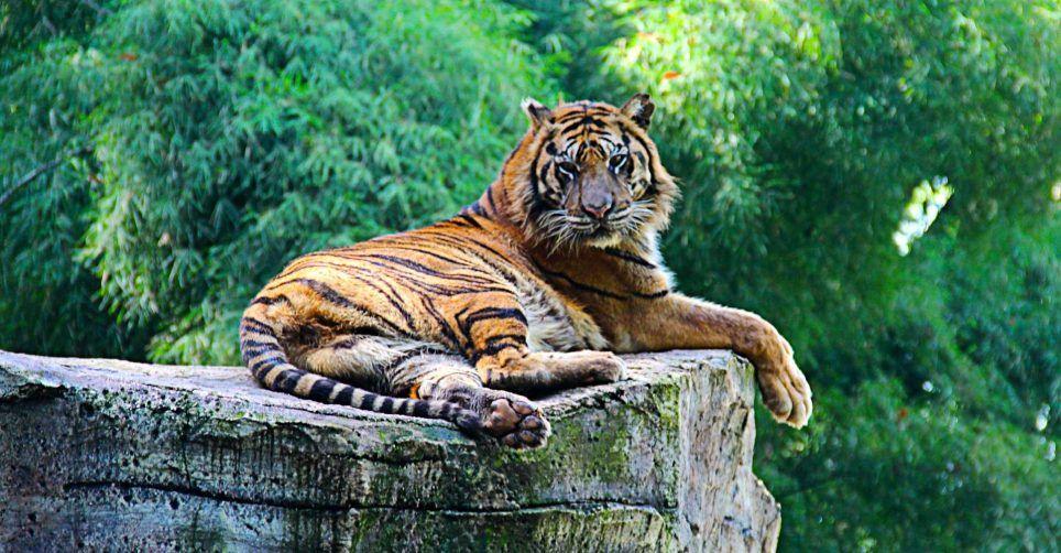 Kebun Binatang Terbaik Dunia