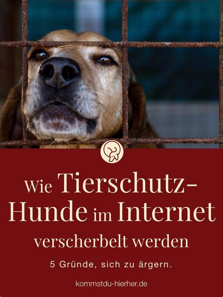 Tierschutzhunde im 5 Ärgernisse Tierschutz