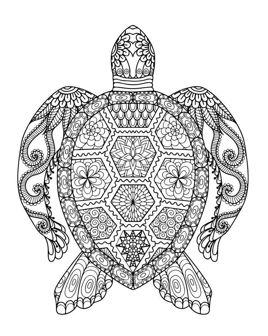 Sea Turtle Coloring Page Unique Coloring Sea Turtlering Page Incredible Turtles Adult Turtle Coloring Pages Ocean Coloring Pages Animal Coloring Books