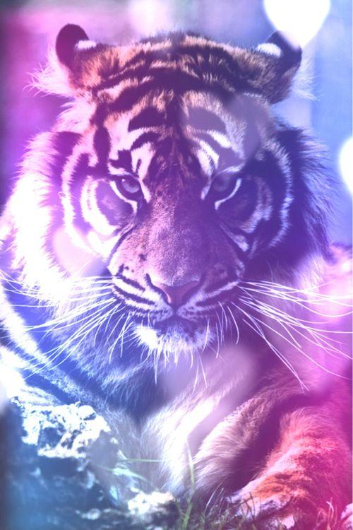 Galaxy Tiger Wild Cats Animals Wild Animals Beautiful