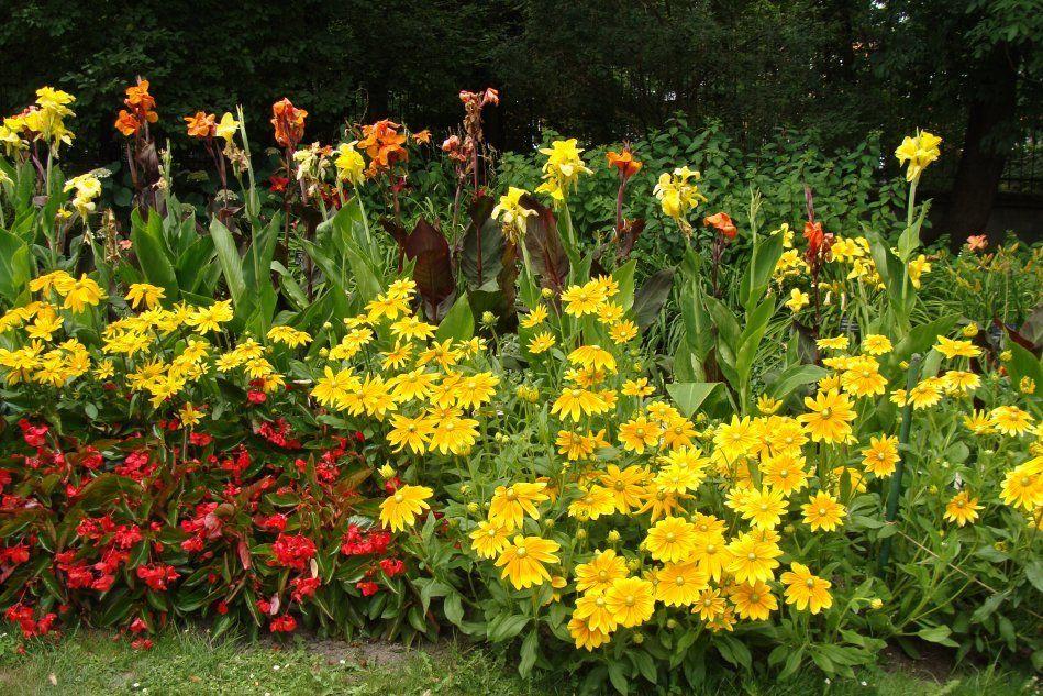 Rabata Kwiatowa W Goracych Kolorach Lata Plants Garden