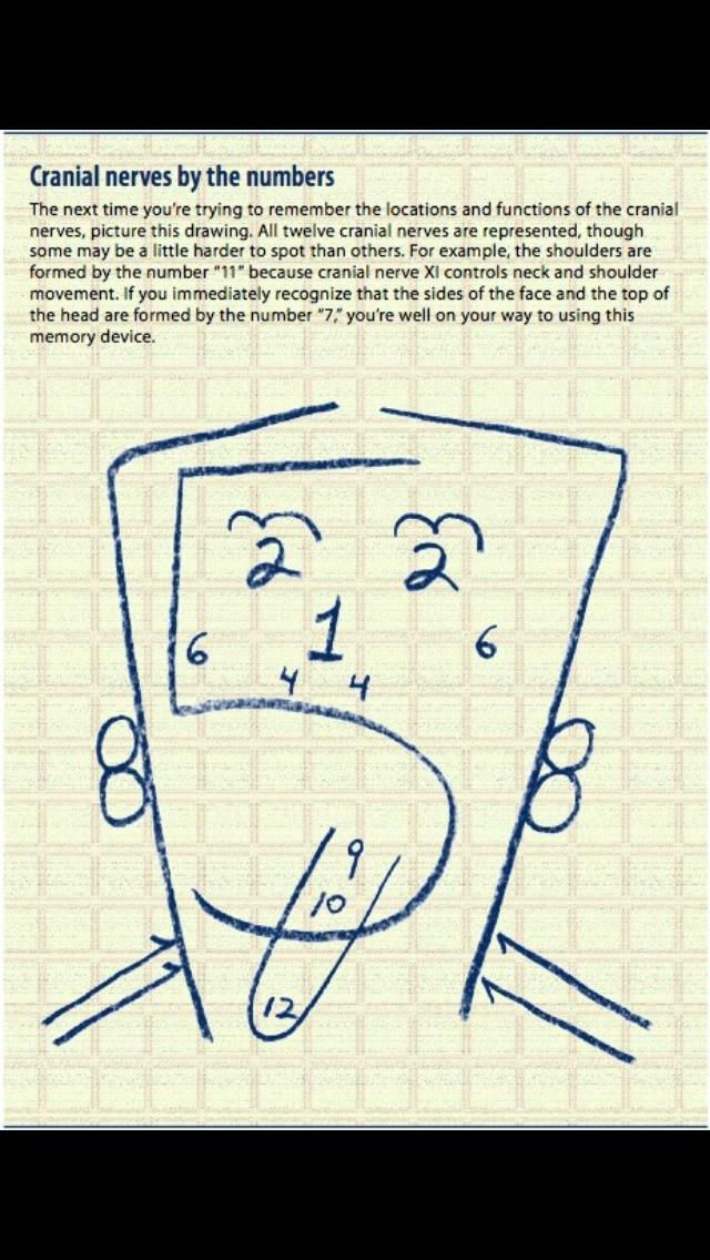 Cranial Nerves by Number | nursing | Pinterest | Bella y Anatomía