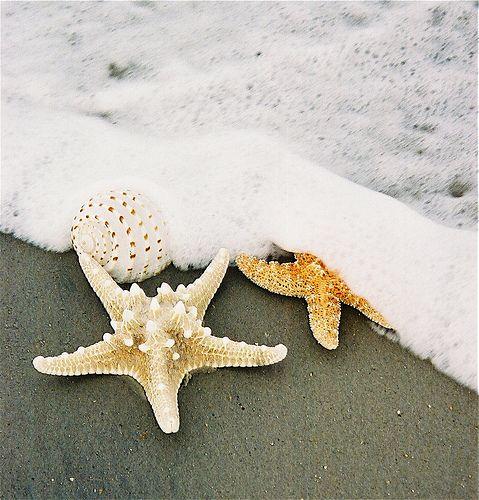 Sally Sold Sea Shells By The Sea Shore Sea Shells Sea Shells