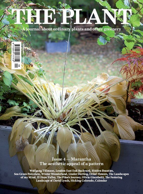 THE PLANT - MAGAZINE  Ordinary plants & others greenery