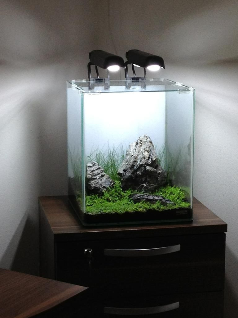Nano cube (With images) | Aquascape, Aquascape aquarium ...
