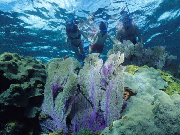 Meet the underwater locals in Los Cabos