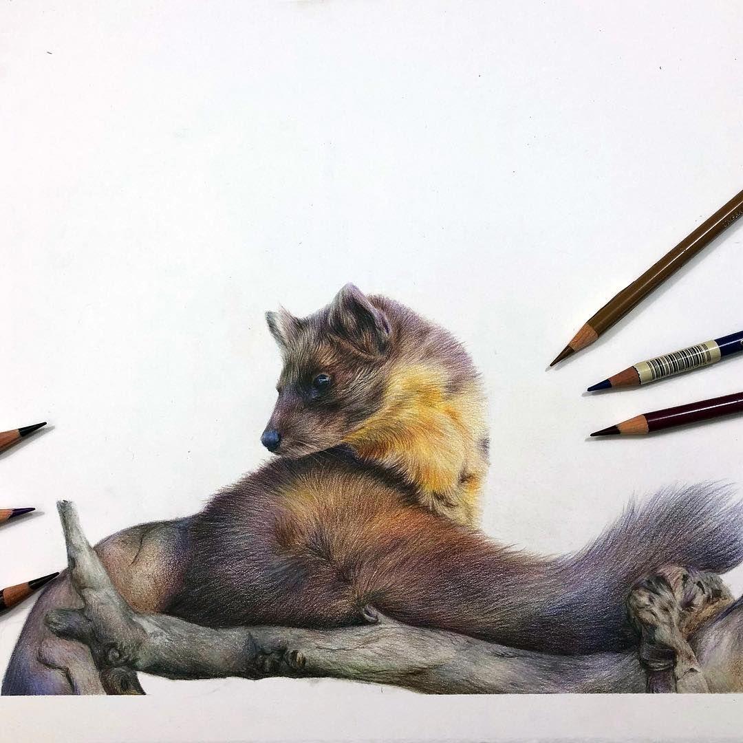 Pin by Krysanthemum on Colorful Art Animal drawings