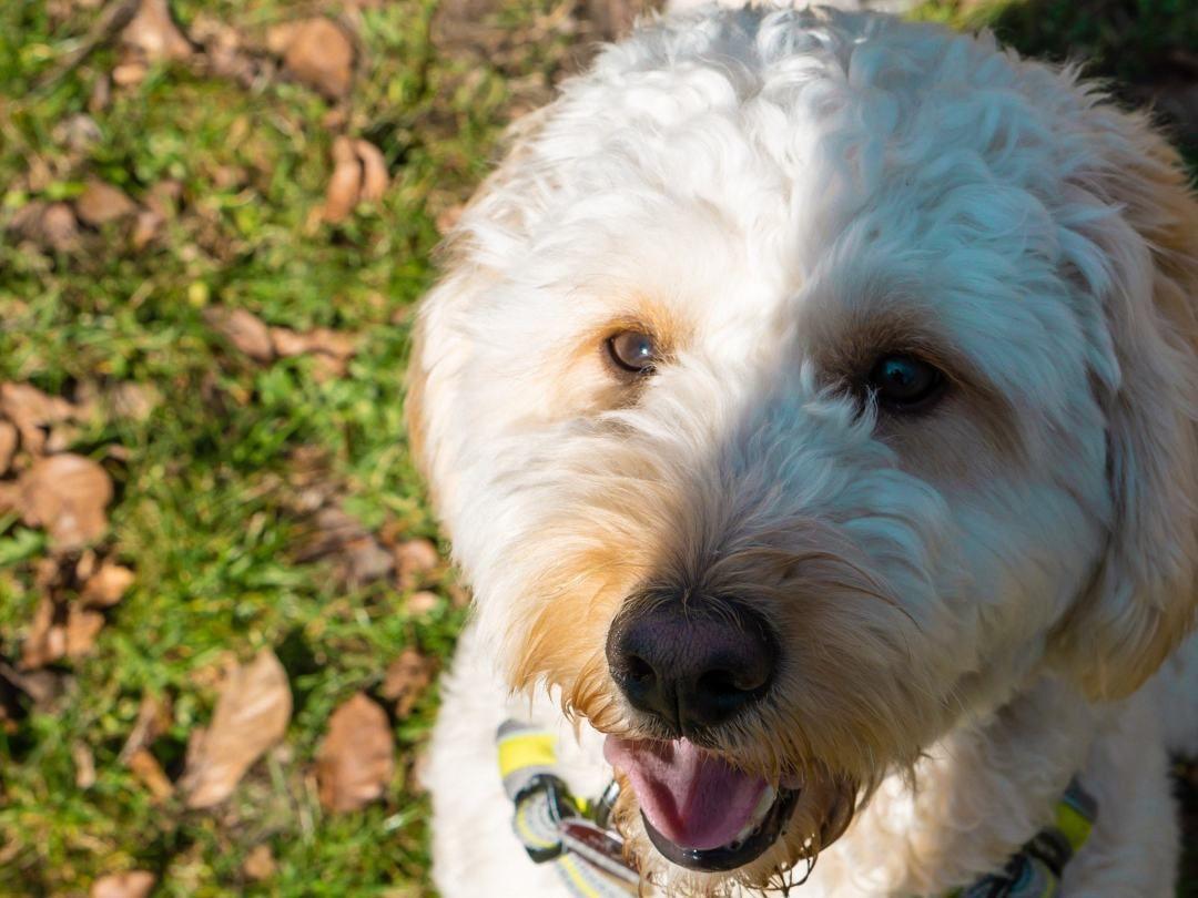 Gruende Gegen Einen Hund Hunde Hunde Zu Kaufen Hund Zu Verkaufen