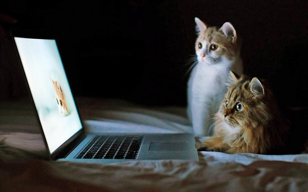 Telecharger Gratuitement Ce Fond D Ecran Cute Kittens Animaux Amusants Animaux Les Plus Mignons