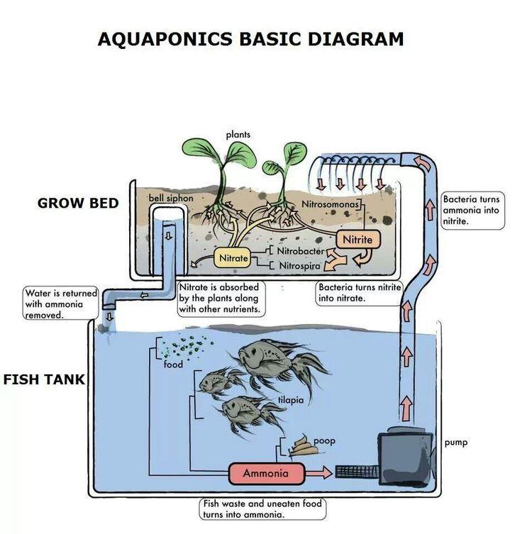 Aquaponics Basic Diagram Aquaponics Pinterest Aquaponics