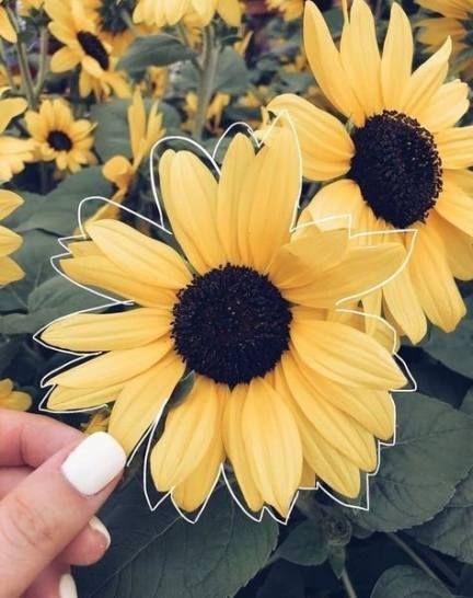 43+ Ideas for flowers aesthetic sunflower #flowers ...