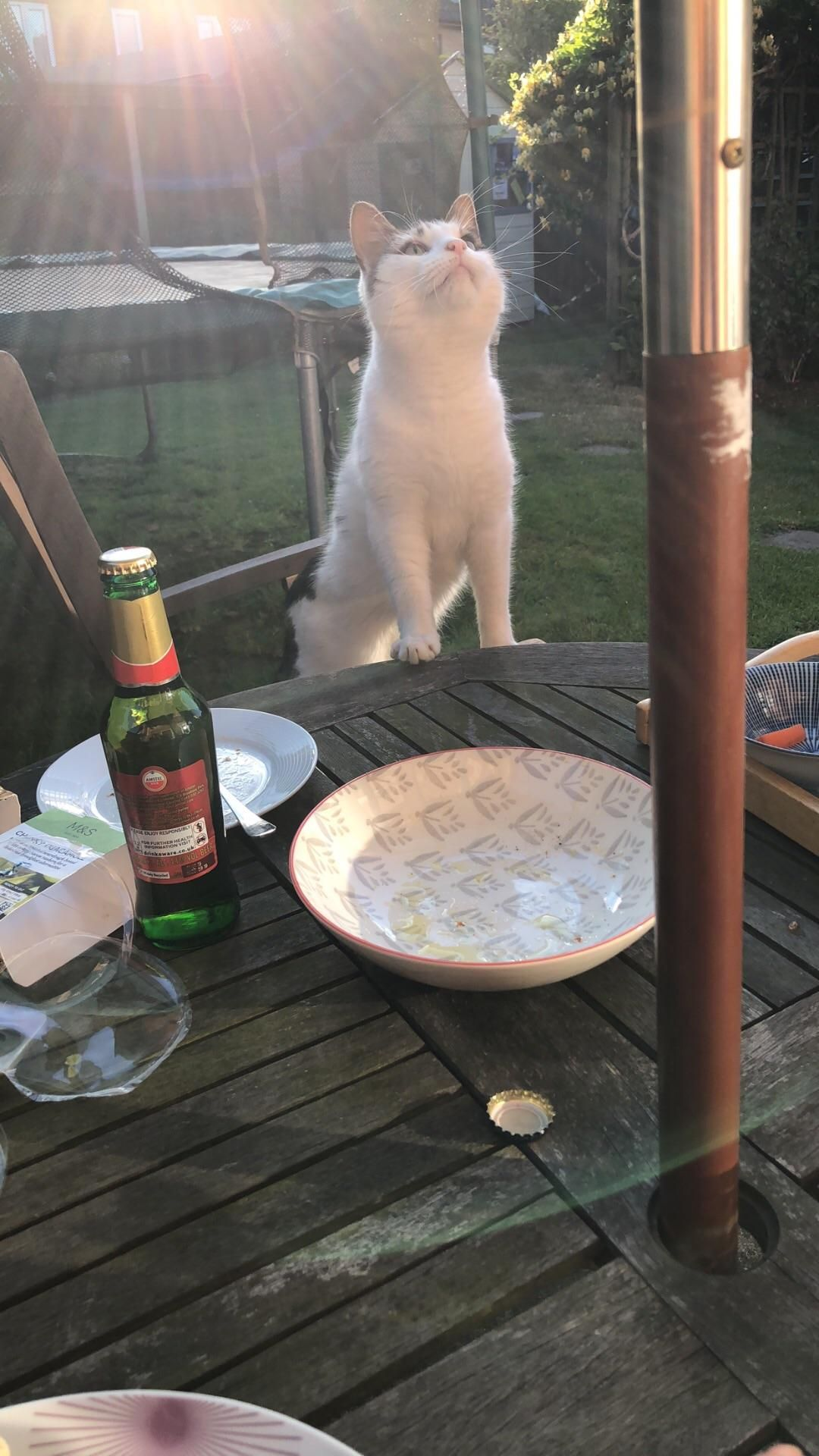 A Dinner Guest Of Great Importance Cats Funny Pictures