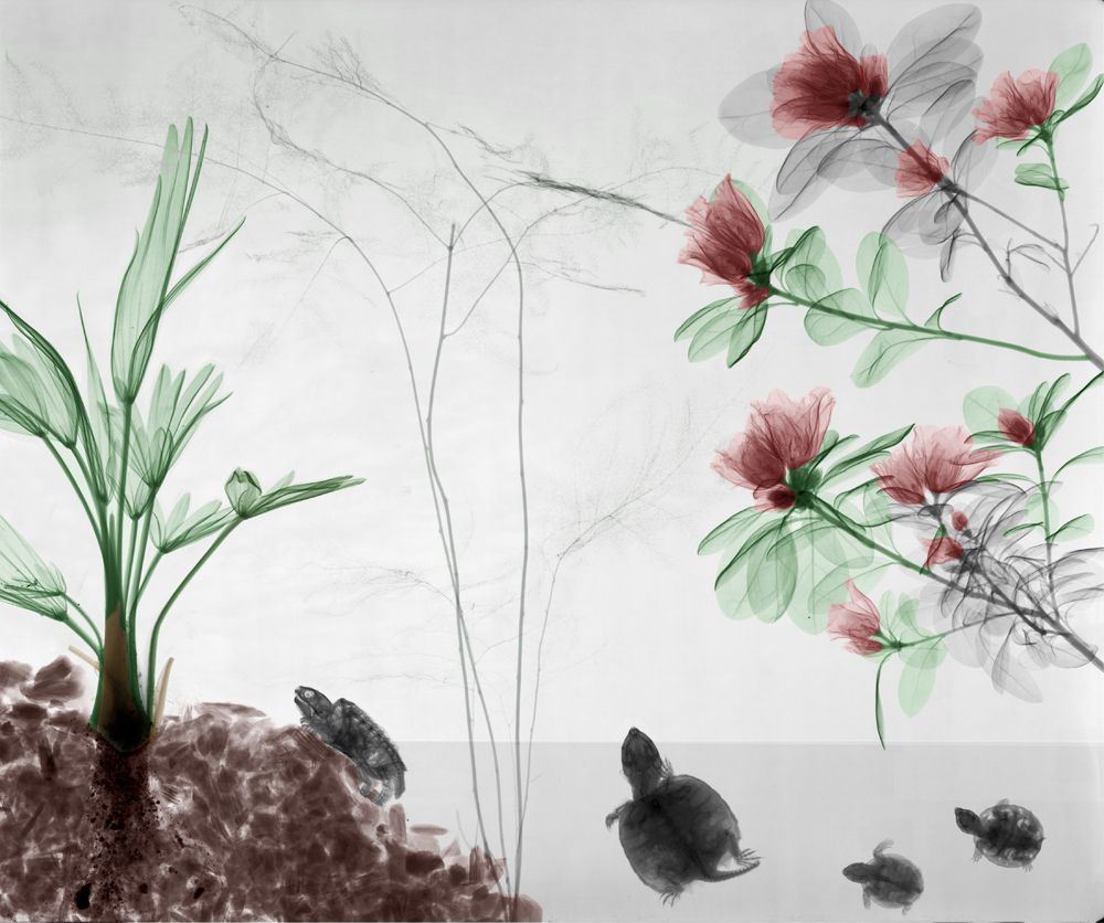 plantes - tortues