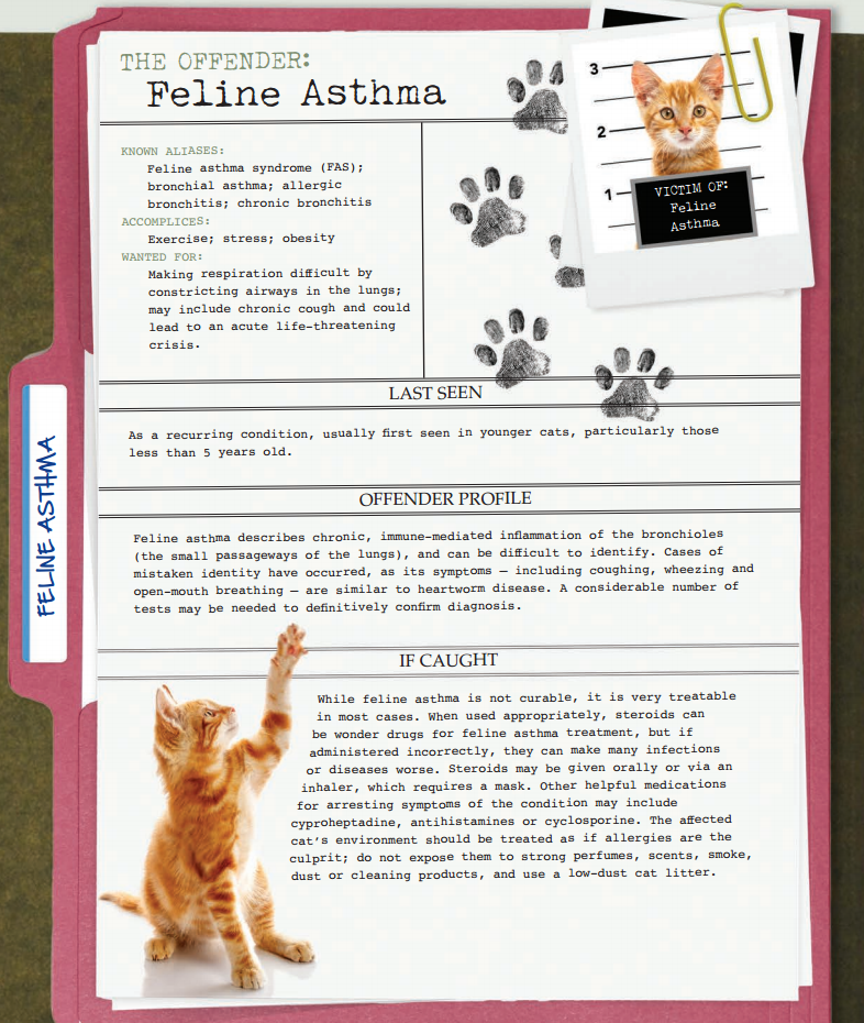 America S Most Unwanted Pet Health Conditions Feline Asthma Pet Health Feline Health Cat Asthma