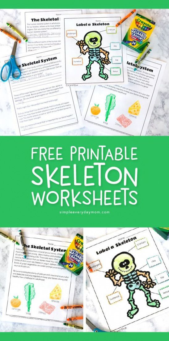 Human Body Activities For Kids | Use these free printable skeletal system worksheets to label basic
