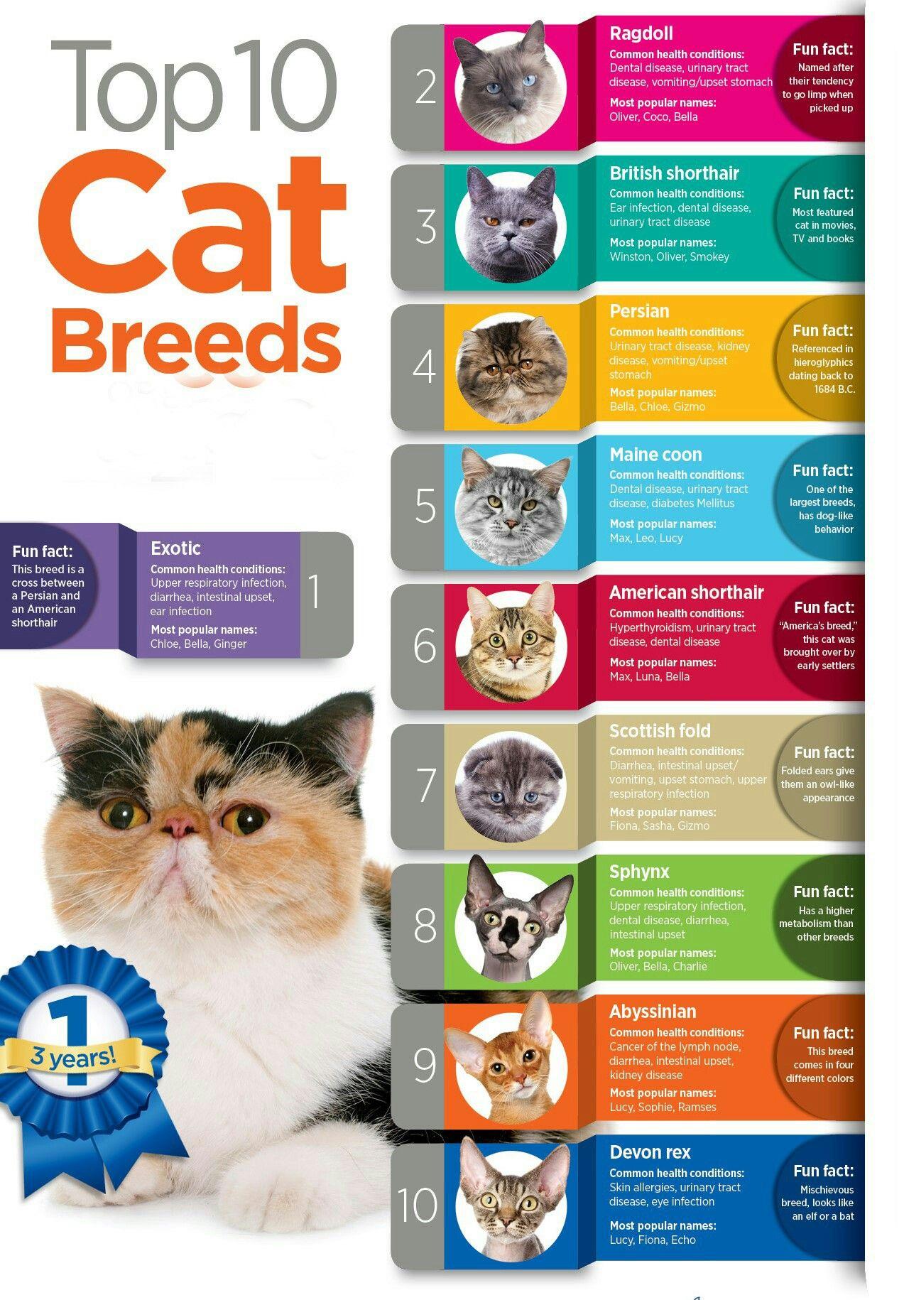 Top 10 Cat Breeds Pet Cat Funny Top10 Cat Breeds Cat Care Cat Breeds Chart