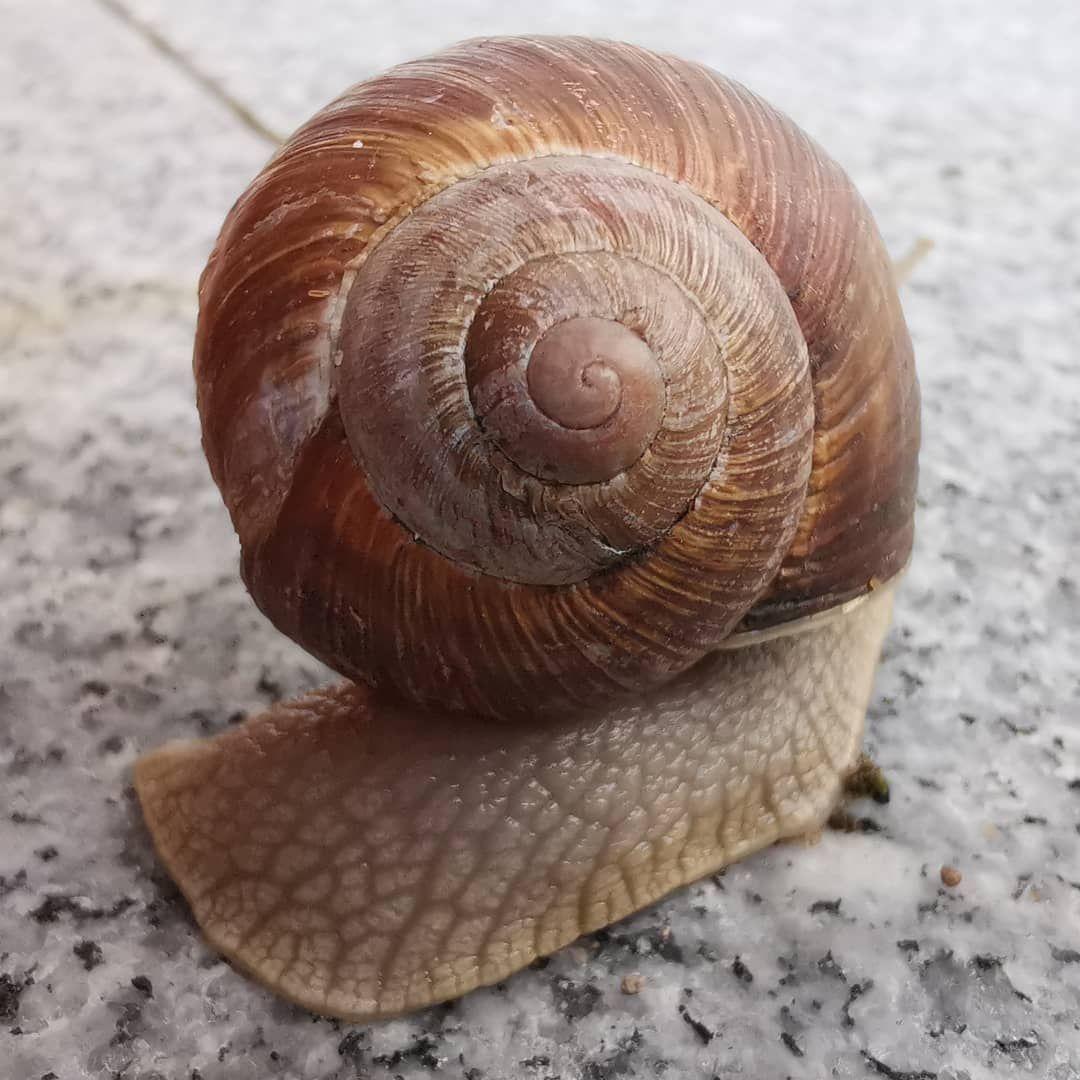Rainy Day Regentag Schnecke Snail Snailshell Schneckenhaus Rainyday Regentag Outdoor Draussen Explore Wanderlust Hiki Regentage Garten Schneckenhaus